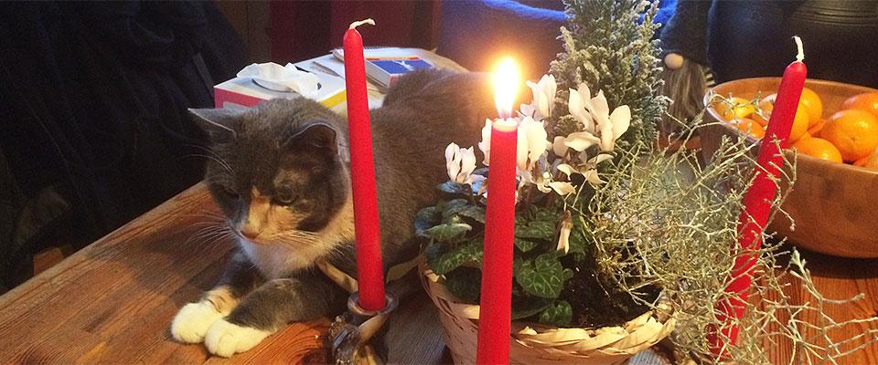 Katt och adventskrans - R4