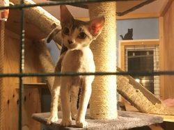 Katt i VIP-rum