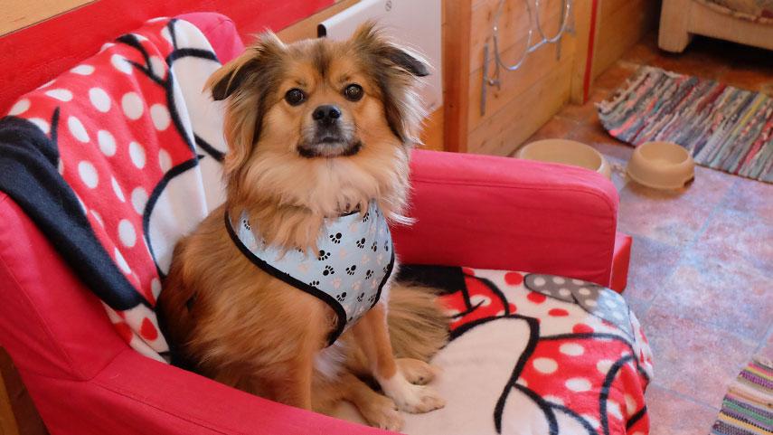 R4 djurpensionat - för hunden