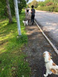 R4 Hunddagis - promenad
