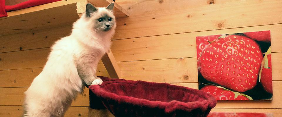 Katt och jordgubbstavla på R4